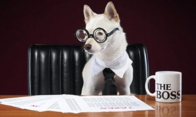 How Your Pet Helps Improve Your Professional Life