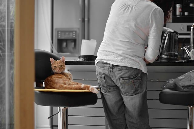 Productivity - How Your Pet Improves Your Life
