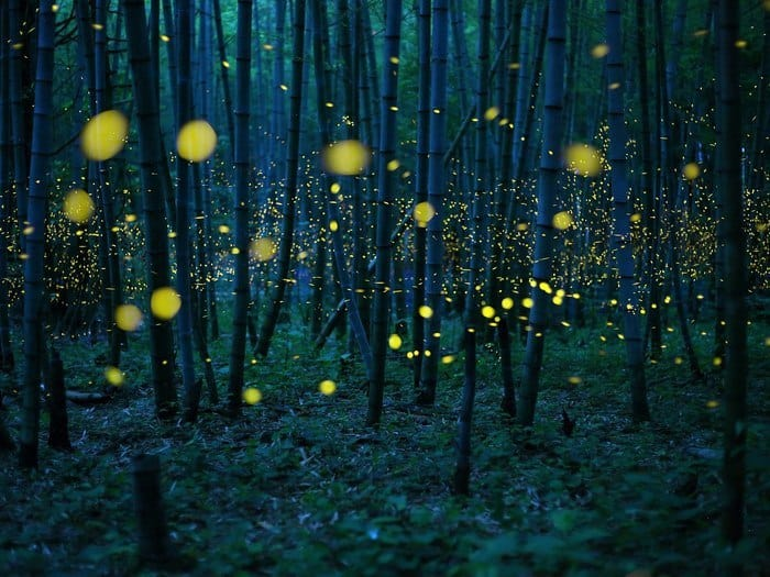6 Kei Nomiyama - Enchanted Bamboo Forest Japan
