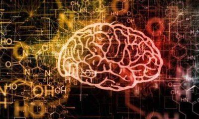 The Top 10 Best Brain Nootropic Supplements