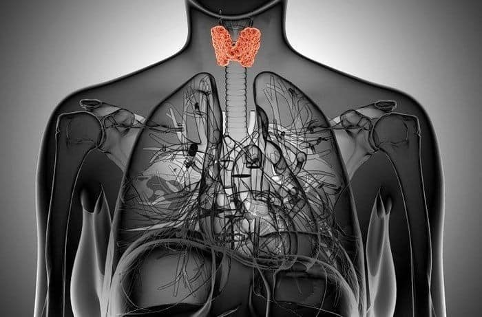 How to Lose Weight When Suffering From A Thyroid Problem