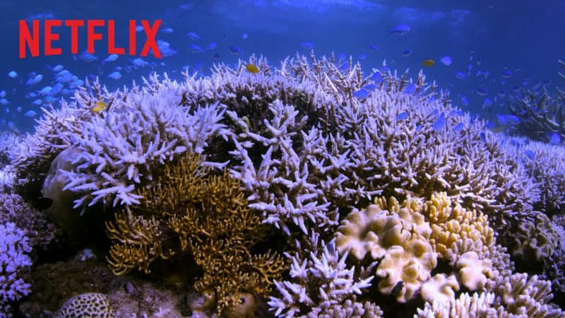 Best Netflix Documentaries - Chasing Coral