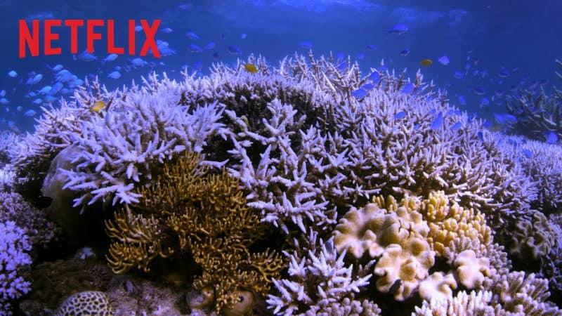 Best Netflix Documentaries - Chasing Coral