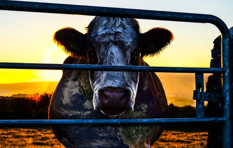 Best Netflix Documentaries - Cowspiracy