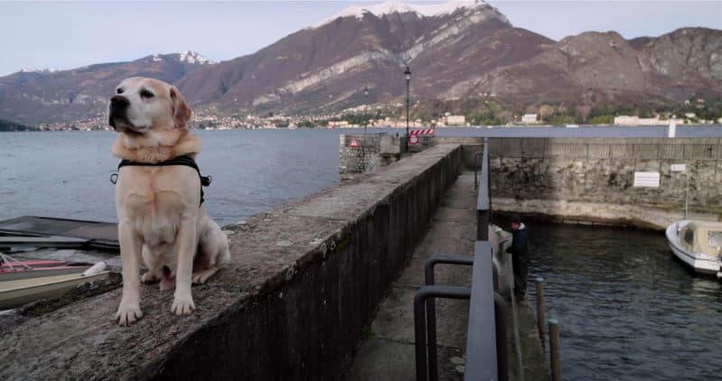Best Netflix Documentaries - Dogs