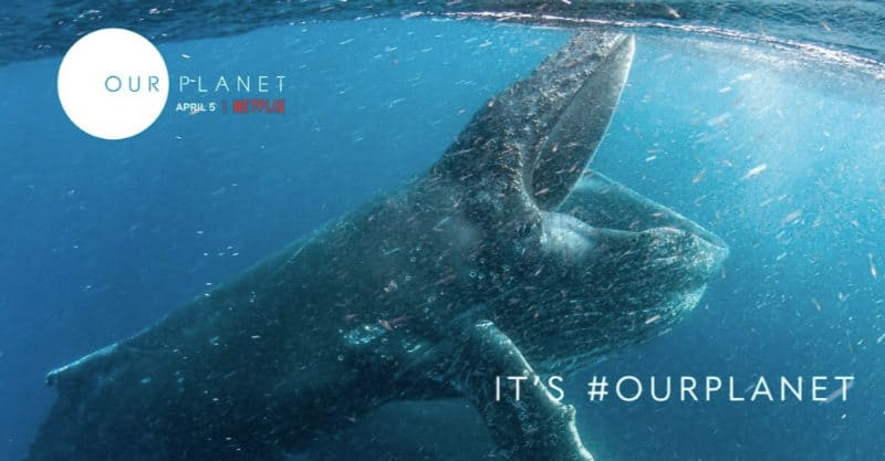 Best Netflix Documentaries - Our Planet