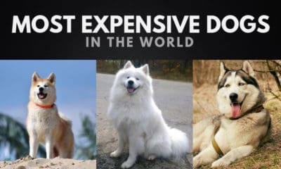 The 20 Most Expensive Dogs in the World