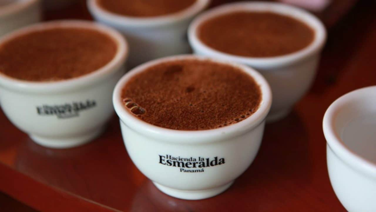 Most Expensive Coffees - Hacienda La Esmeralda