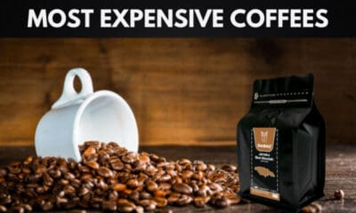 The 10 Most Expensive Coffees in the World