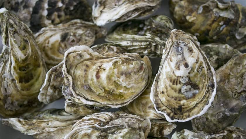 Most Expensive Foods - Oysters