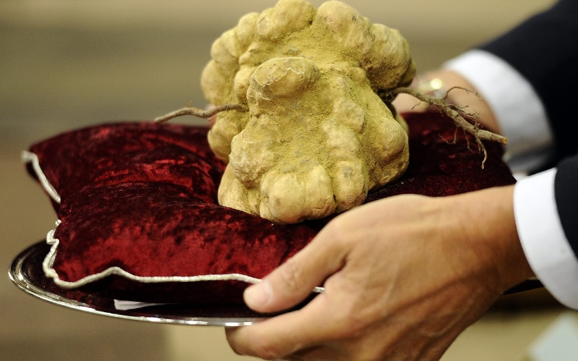 Most Expensive Foods - White Truffles