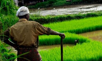 53 of The Most Precious Farmer Quotes
